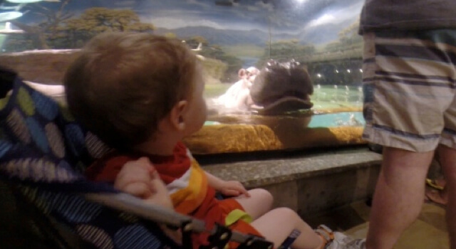 Beckett Goes To Adventure Aquarium