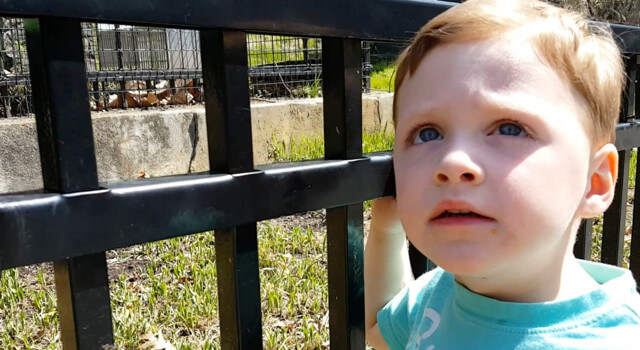 Beckett Goes To A Special Zoo